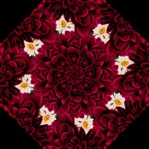 Dahlia Kaleidoscope Kit