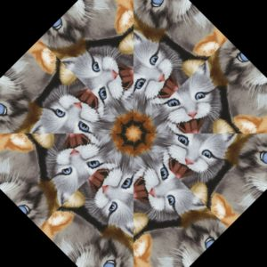 Selfie Cats 3
