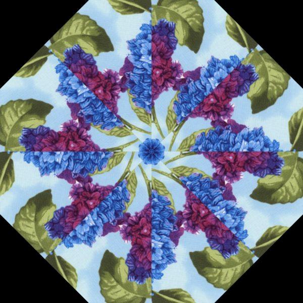 Hydrangea H 10