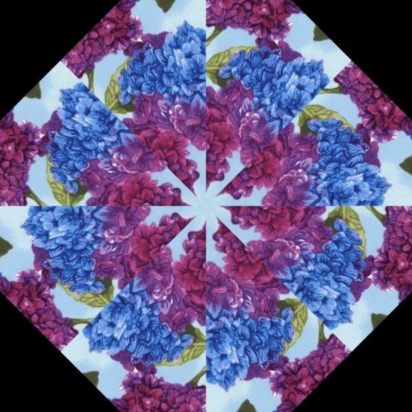 Hydrangea H 5