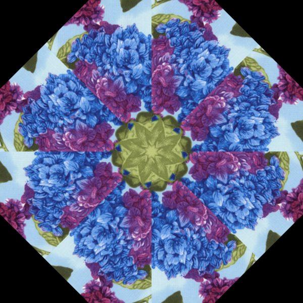 Hydrangea H 7