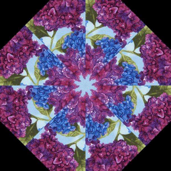 Hydrangea H 8