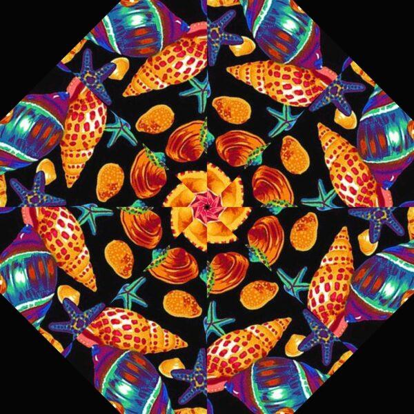 shells sc 6