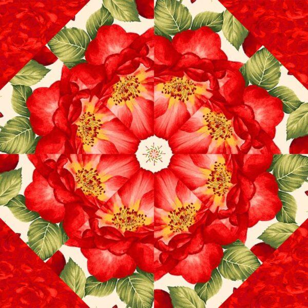 Garden Rose C 2