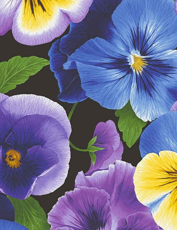 Large Pansy