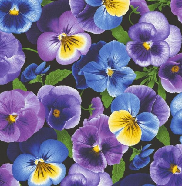 Large Pansy - larger